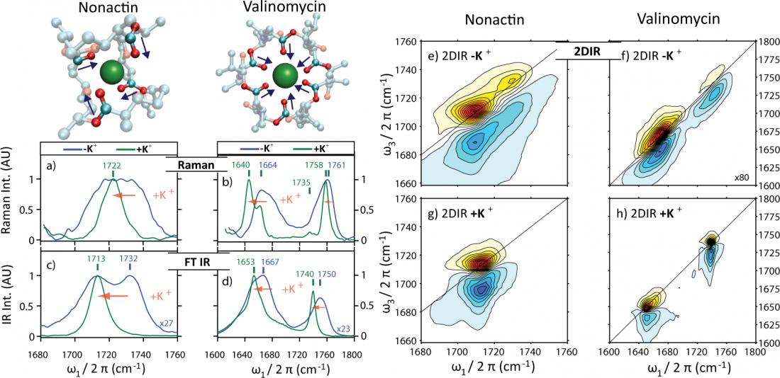 Fig. 3: FTIR, Raman and 2DIR spectroscopy on model compounds